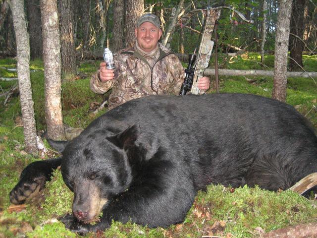 Dan Wallace - Ontario Black Bear